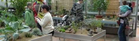 Výstava sukulentů a jiných exotických rostlin Brno 2012
