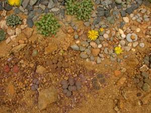 Oblíbené živé kameny