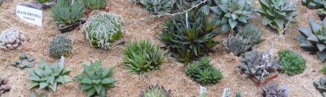 Výstava sukulentů a dalších exotických rostlin Brno 2015