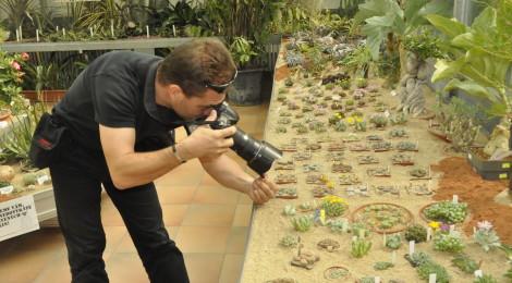 Brněnská výstava se tentokrát zaměří například na sukulentní bonsaje